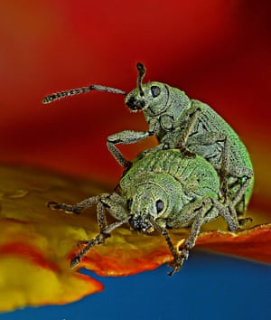 10th place went to a picture of a weevil, magnified 80x