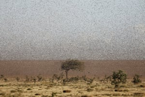 """Kenya is facing some of the worst locust plagues in decades, but a start-up hopes to transform the pests into profits and bring """"hope to the hopeless"""" whose crops and livelihoods are being destroyed by the insects."""