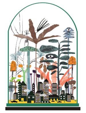 Rainforest for Guardian