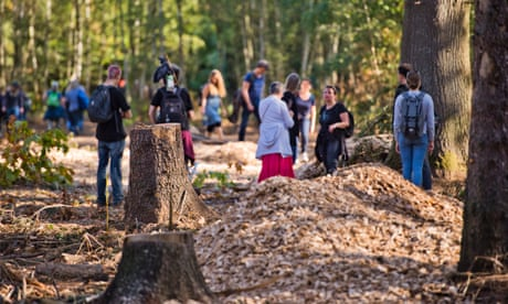 Berlin startup offers €1m to save ancient Hambach forest from coal mining