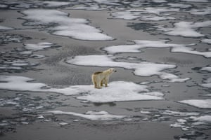 Franz Josef Land, Russia A polar bear is seen on ice floes in the British Channel of the archipelago