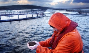 A salmon farmer with a handful of fish feed in Loch Fyne, Scotland.
