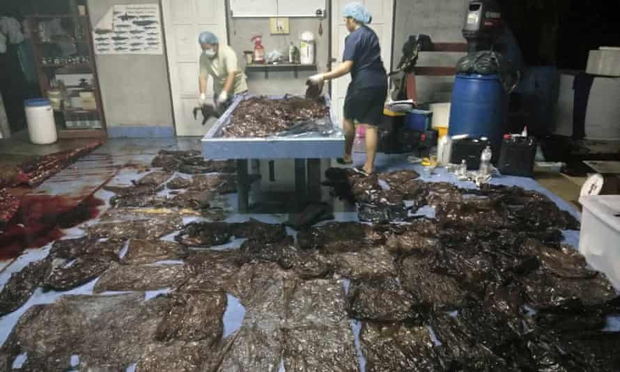 Some of the plastic bags extracted from a whale's stomach in Thailand.