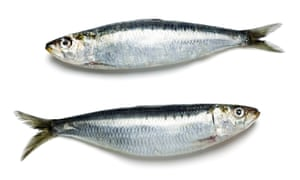 Sardines: eating fish once a week is linked to a 70% reduced risk of Alzheimer's in old age.