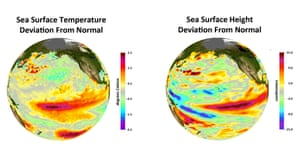 Deviations from normal sea surface temperatures (left) and sea surface heights (right) at the peak of the 2009-2010 central Pacific El Niño, as measured by NOAA polar orbiting satellites and NASA's Jason-1 spacecraft, respectively. The warmest temperatures and highest sea levels were located in the central equatorial Pacific.