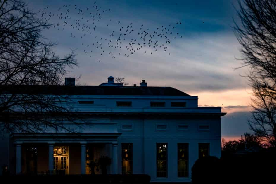 Flocks of birds fly over the West Wing of the White House as the sun sets in Washington.