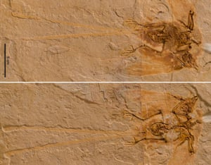 The beautifully preserved Junornis fossil.