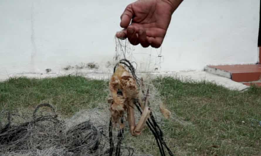 A long-dead crab in Din's nets