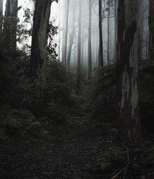 'Mountain Ash' - A path leads through the Mountain Ash trees into the mist, Toolangi State Forest. (2016)