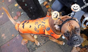 Dog dressed up in Halloween costume