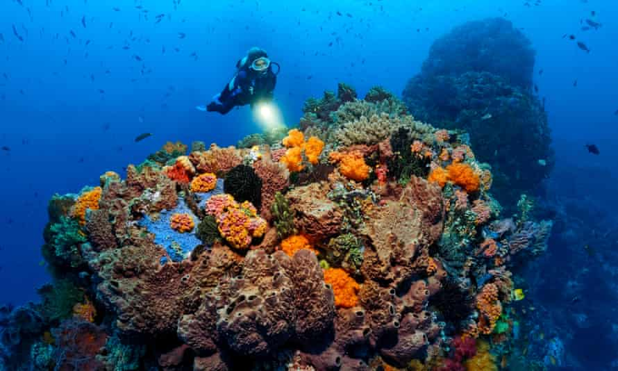 A diver views on the Great Barrier Reef