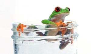 Frog escaping from glass of water