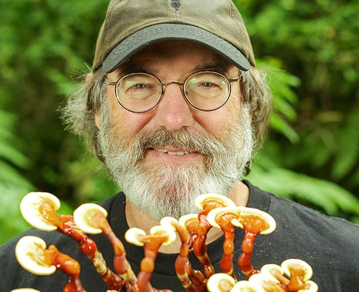 Mushroom magic: why the latest health fad might be on to