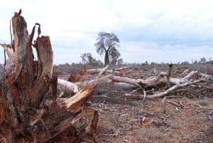 Land clearing on the Sunshine Coast