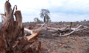 Land clearing on the Sunshine Coast, Queensland.