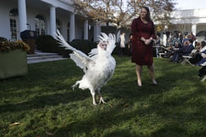 Butter walks in the Rose Garden before the pardoning ceremony.