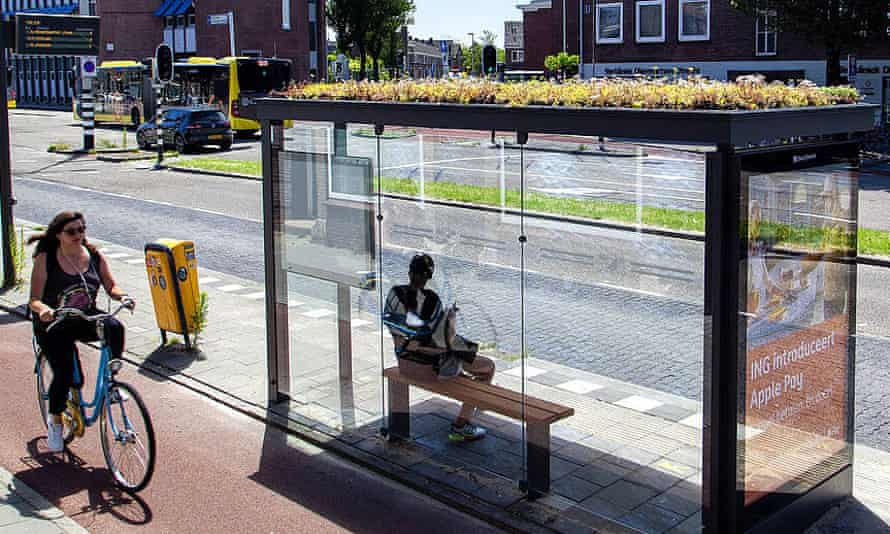 A 'bee stop' in Utrecht. Green roofs of bus stops capture particulates, store rainwater and promote urban biodiversity. All of these are beneficial for insects such as bees and butterflies.
