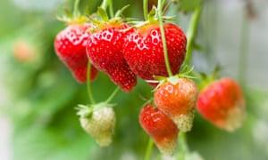 Berry nice: 'Just Add Cream'.