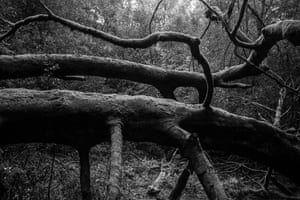 The woods of Leith Hill in Surrey.
