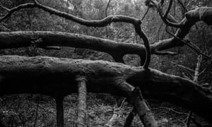 Leith Hill offers a sense of immemorial nature.