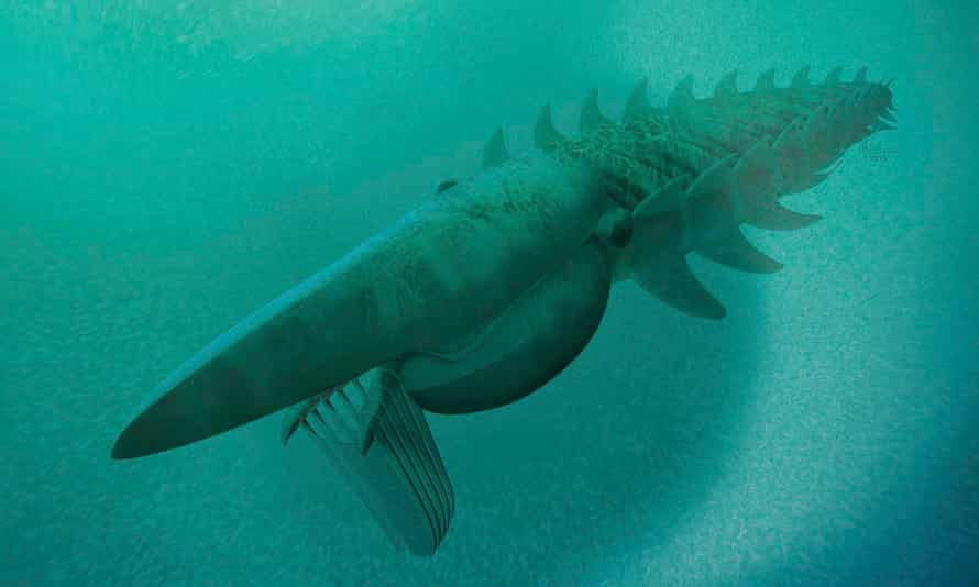 The reconstruction of a filter-feeding Aegirocassis benmoulae based on the fossils unearthed in Morocco.