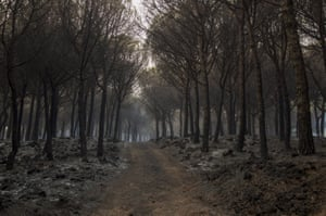 A forest damaged by fire on the slopes of Mount Vesuvius, in Boscotrecase, Italy