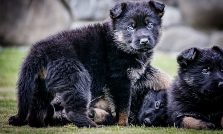 NZ police puppy pic