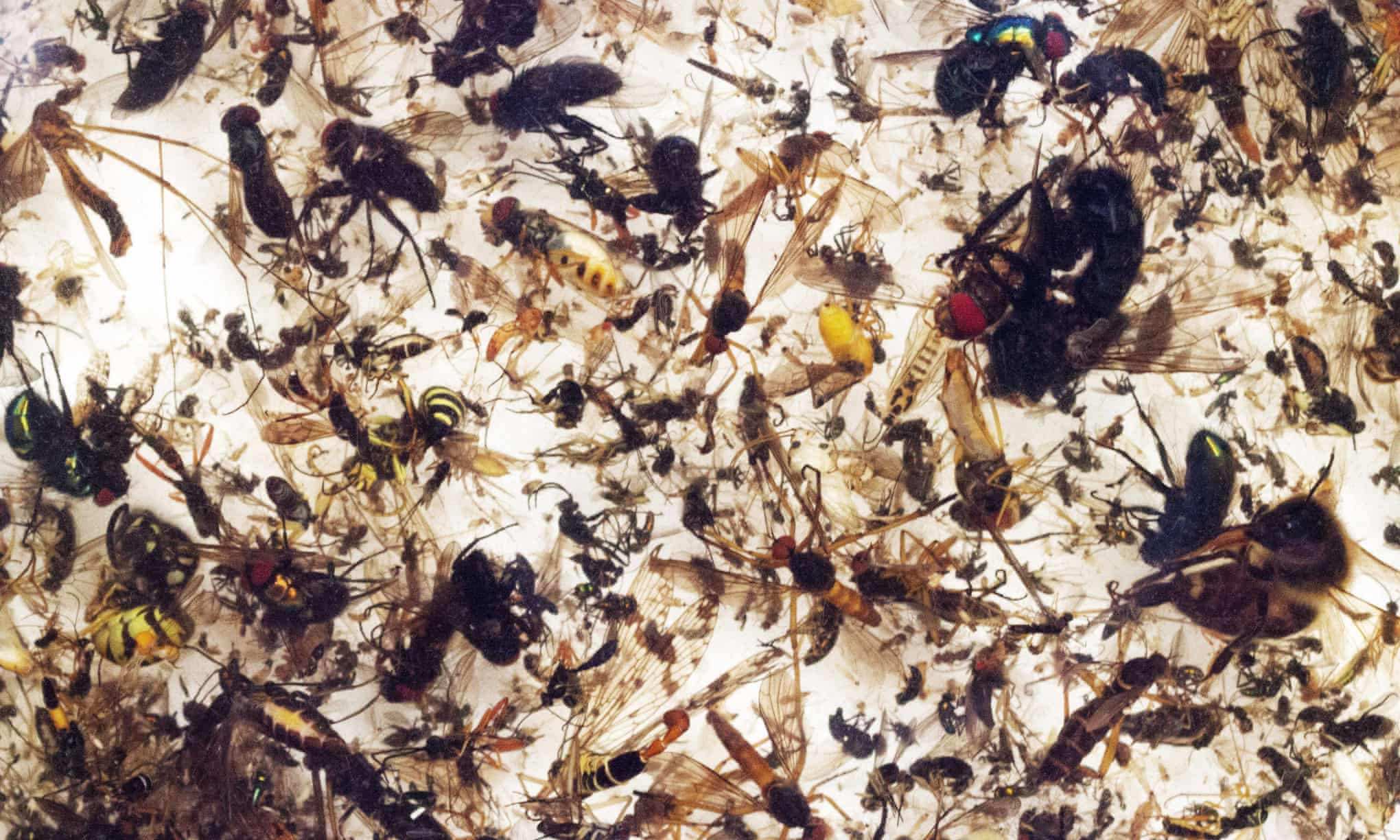 Plummeting insect numbers 'threaten collapse of nature'