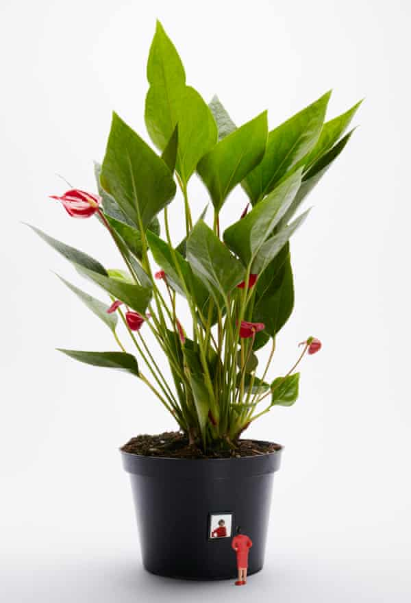 Although good, 'a peace lily will never replace a partner, nor a child, nor even a pet'.