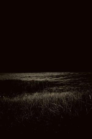 Moonlit Grasses
