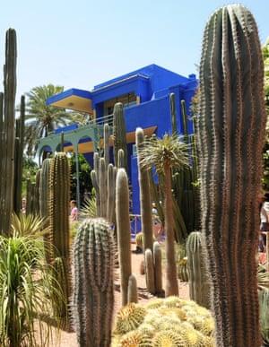 Yves Saint-Laurent's giant cacti-spiked Jardin Majorelle in Marrakech.