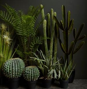 Abigail Ahern's faux cacti.