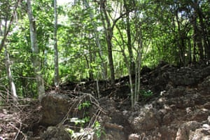 The jungle outside the Christmas Island detention centre is dominated by jagged rocks and steep declines. Fazel Chegeni's body was found in this jungle after he escaped from the detention centre.