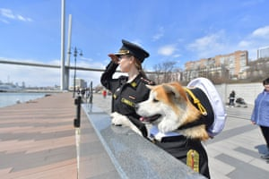 A girl walks an Akita-inu dog dressed in a military uniform.