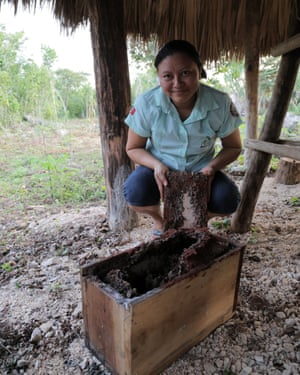 Stingless bees produce a highly prized honey in yucatan, Yucatan