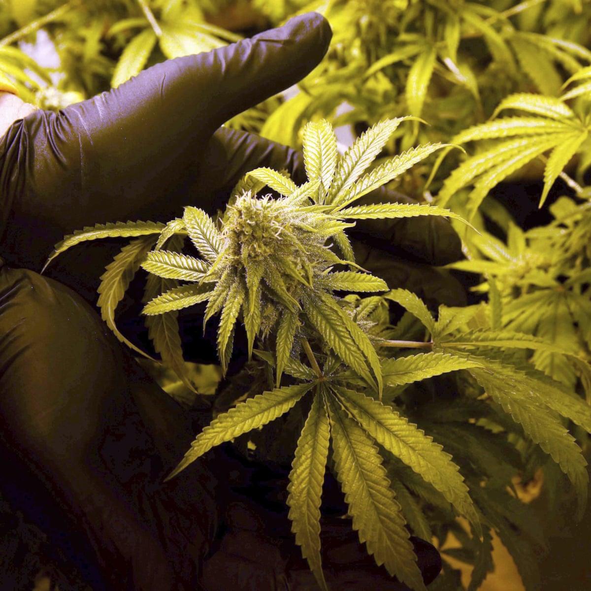 Продаем тест на марихуану пирсинг с марихуаной