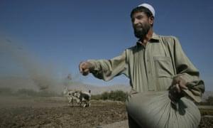 A farmer sowing poppy seeds in Nangarhar province, Afghanistan.
