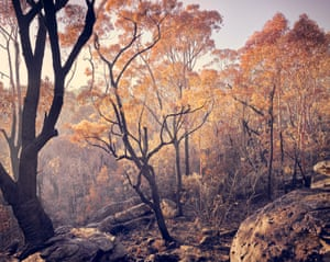 Objects and Landscape found immediately after the 2018 Menai Bush Fire, Sydney, Australia