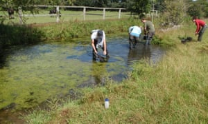 Volunteers rewild the Home Park water meadows at Hampton Court