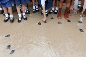Chonburi, Thailand Schoolchildren release turtles into the sea