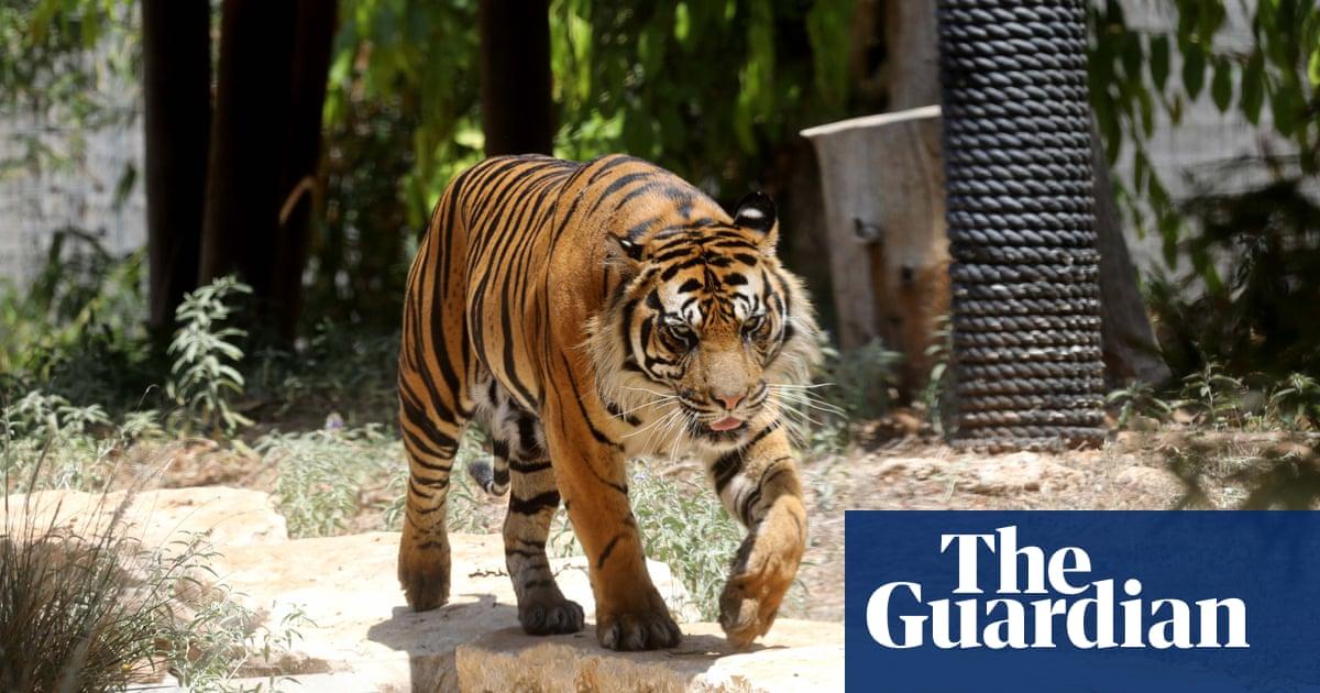 Tiger kills woman working in safari park in Chile