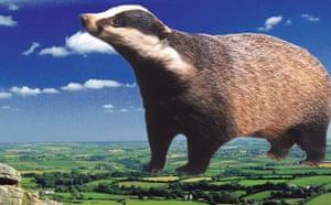 Ebbsfleet Landmark: The Badger of Bodmin