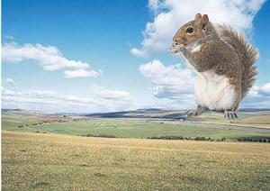 Ebbsfleet Landmark: The Squirrel of the South