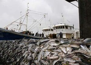 Ivory Coast fishing