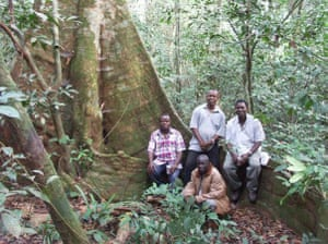 Gola rainforest