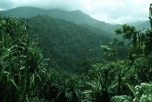 Rainforests in Sumatra, Indonesia