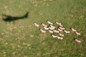 Oryx and a WCS Cessna shadow, Boma National Park