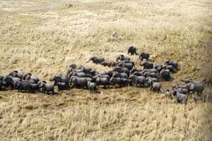 A herd of elephants in the Sudd wetlands