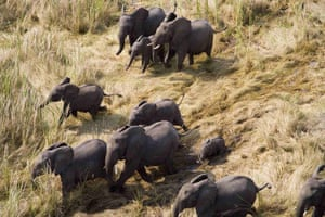 A herd of elephants migrating through the wetlands of Southern Sudan