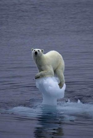 Polar bear, off Barents ya Island